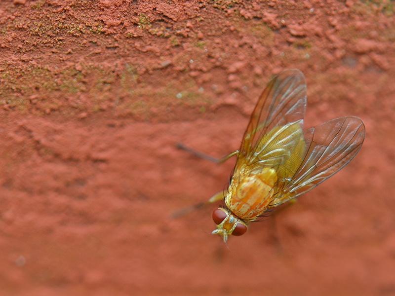 pest control wokingham