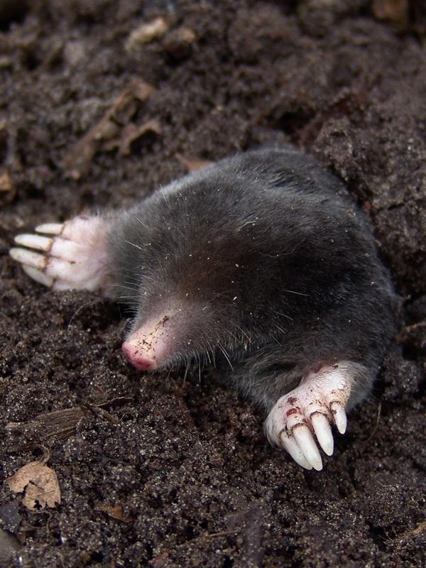 mole catcher wokingham